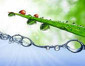 Fresh grass with dew drops and ladybugs above the water level poster