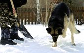man and his dog removing snow, humour, concept of team work poster