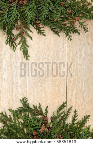 Abstract border of cedar cypress leyland with pine cones over oak background.