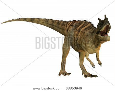 Ceratosaurus On White