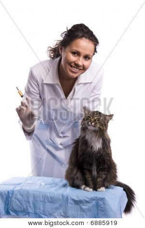 poster of Vaccination. Pretty vet with syringe and feline subject. Veterinarian have a medical examination a cat. White background.