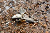 Dead smooth-hound shark washed ashore in Hastings England poster