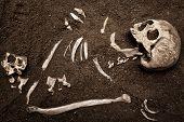 scene crime and buried bone poster
