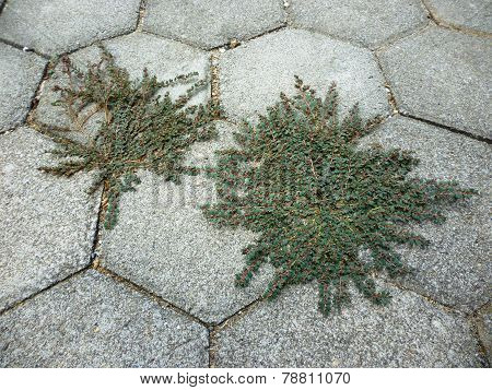grass on paving