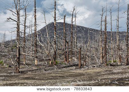 Lifeless Desert Landscape Of Kamchatka Peninsula: Dead Wood (tolbachik Volcano Lava Field)