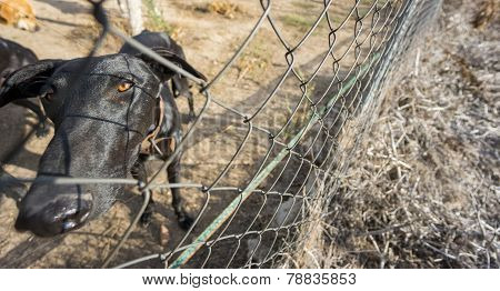 Wide angle view of Sad dog locked behind fence