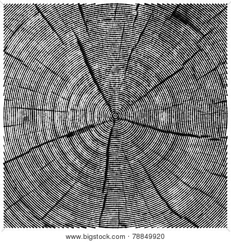 vector natural illustration of engraving saw cut tree trunk. abstract sketch of wood texture