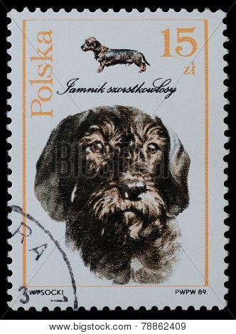Series Breed Of Dog