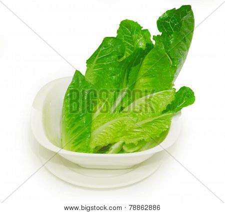 Cos lettuce , fresh green leaves on a white cup