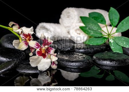 Spa Concept Of Orchid Cambria Flower, Green Leaf Shefler With Drops And White Towels On Zen Stones O