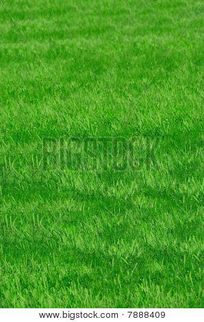 Gras Textur