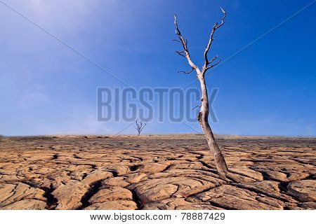 Dry Tree On Cracked Earth. Ecological Disaster