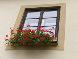 Red flowers on the windowsill
