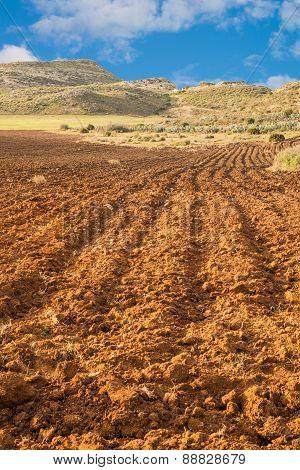 Furrowed Farmland