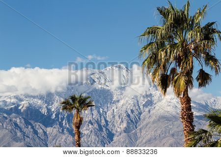the contrast of winter in California. warm palm trees in the valley and snow in the high mountains poster