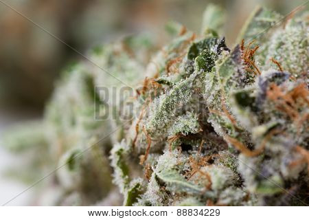 macro shot of a dired marijuana bud with crystalline structures poster