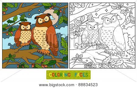 Coloring Book (owl)