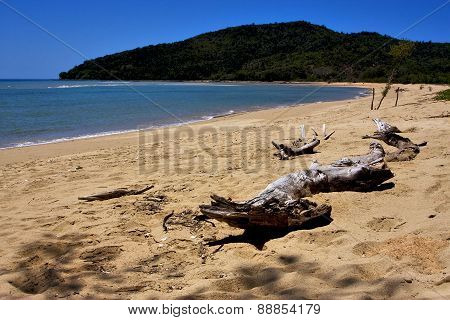 Beach And Sand  In Nosy Be And A Tree