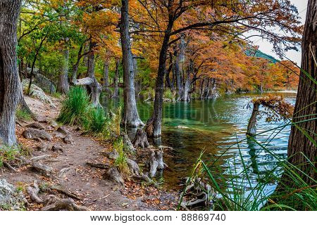 Orange Cypress Trees on the Clear Frio River, Texas