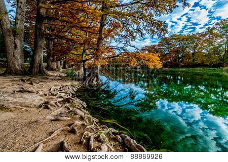 Gnarly Cypress Roots and Beautiful Fall Foliage Surrounding the Clear Green Waters of the Frio River Texas. poster