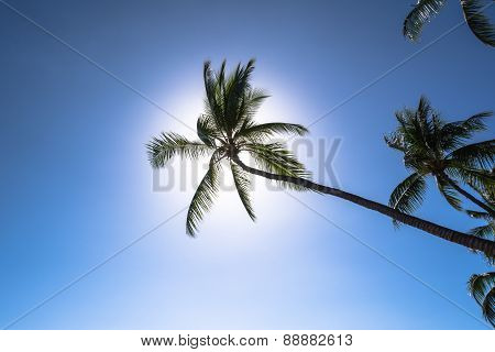 Palm tree in backlight, Hawaii