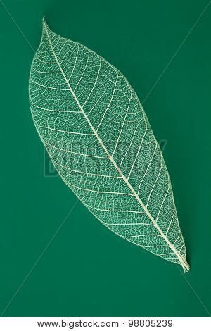 Dry Transparent Leaf Isolated On Green