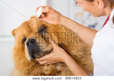 By Listening To A Dog Veterinary Chow Chow