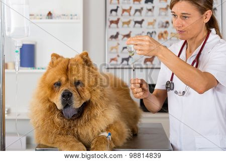 By Listening To A Dog Chow Chow