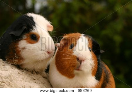 Two Cute Pets