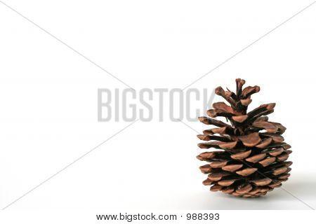 Solo Pine Cone