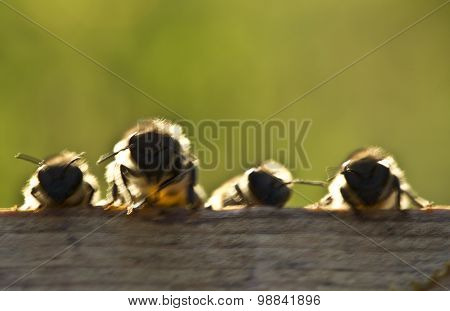 Young Bees