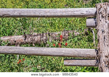 Beautiful scarlet paintbrush (Castilleja miniata) and tiny aspen bluebells (Mertensia arizonica) are framed by the rails in a fence poster