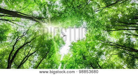 View Through Tree Canopy With Bird Soaring