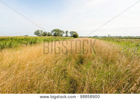 Rural Area With Very Tall Yellowed Grass