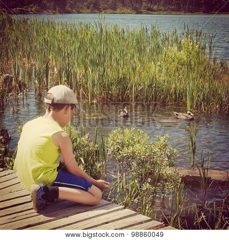 Young Boy Feeding Ducks  From His Hand
