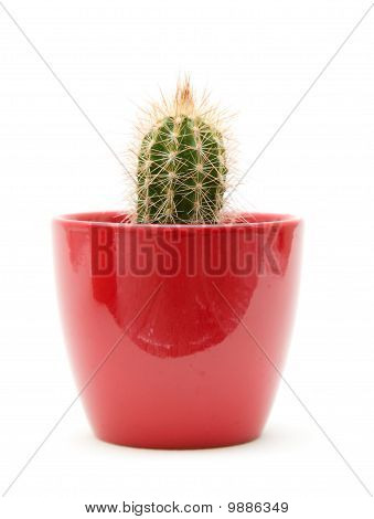small cacti in red pot; isolated on white; poster