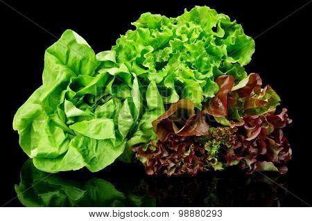 Many Varieties Of Lettuce On Black
