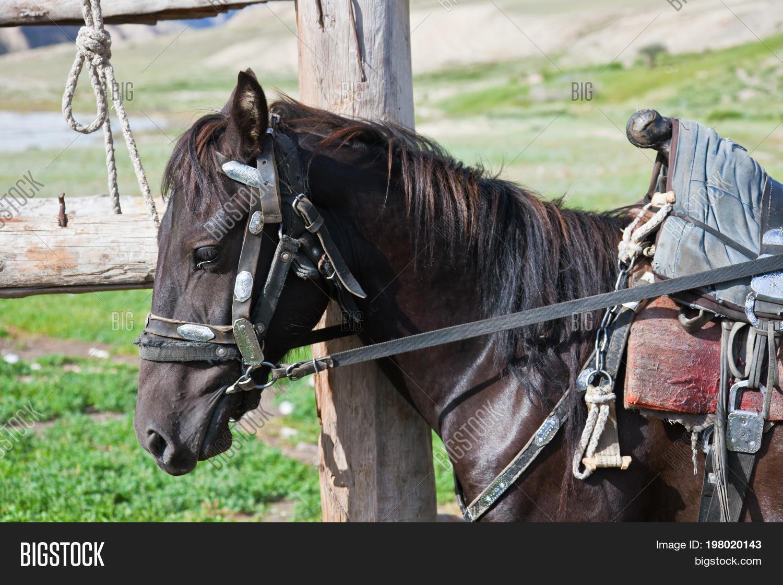 Kyrgyz Black Stallion Image & Photo (Free Trial) | Bigstock