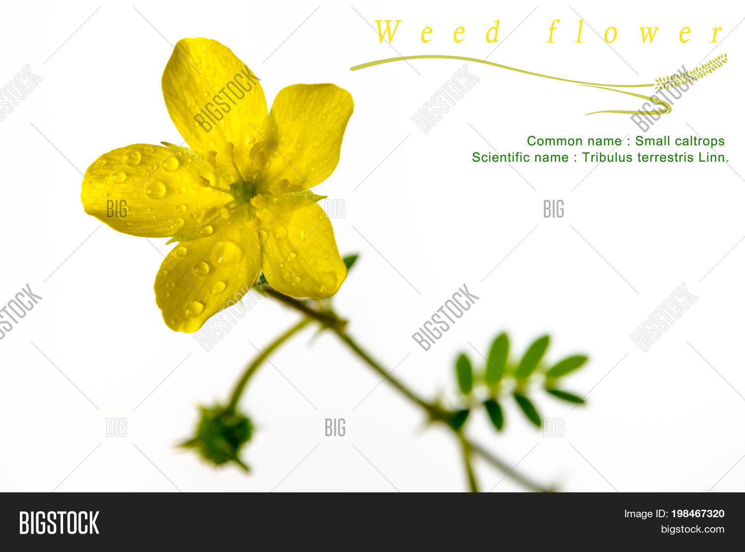 Yellow Flower Small Image Photo Free Trial Bigstock