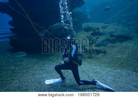 Dangerous sharks and fishes with diver in an aquarium