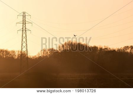 Silhouette Of A Kestrel Falcon Raptor (falco Tinnunculus) Hunting Hovering Over Meadow At Sunset Wit