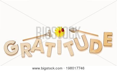 Top view of capital letters made of wood spelling the word gratitude isolated on white with yellow daisy ladybug miniature shovel and rake cultivate gratitude concept.