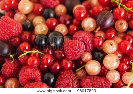 Mixed Summer Berries (raspberry, Blackcurrant, Redcurrant, White Currant, Gooseberry, Cherry) On The