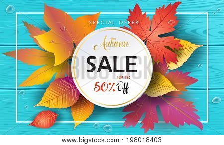 Hello Autumn Sales banner, Sale Vector illustration. Fall sales season voucher with realistic drawing maple leaves, leaf fall, wood texture, water drops. Thanksgiving Holiday decoration. Maple tree leaves, lettering, wooden texture.
