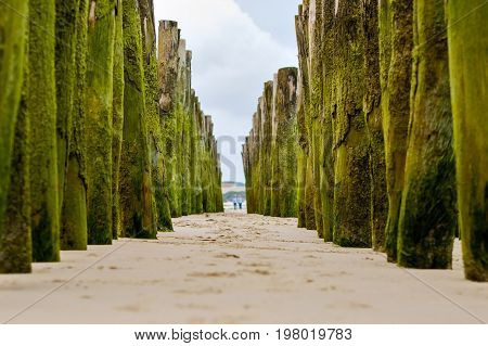 Wooden breakwaters on Wissant beach on sunny summer day, France