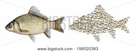 Fish carp set school, isolated on white background