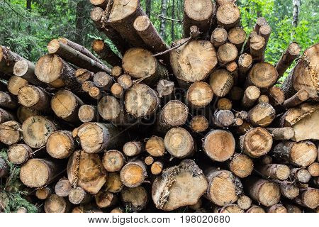Heap of tree trunks in forest in summer
