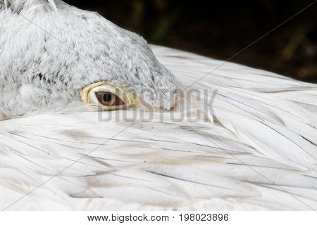 A closeup of the head of a pelican