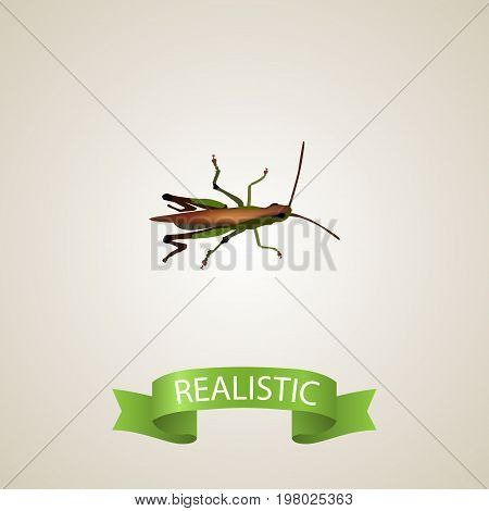Realistic Grasshopper Element. Vector Illustration Of Realistic Locust Isolated On Clean Background