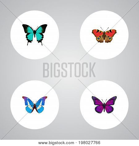 Realistic American Painted Lady, Purple Monarch, Copper And Other Vector Elements